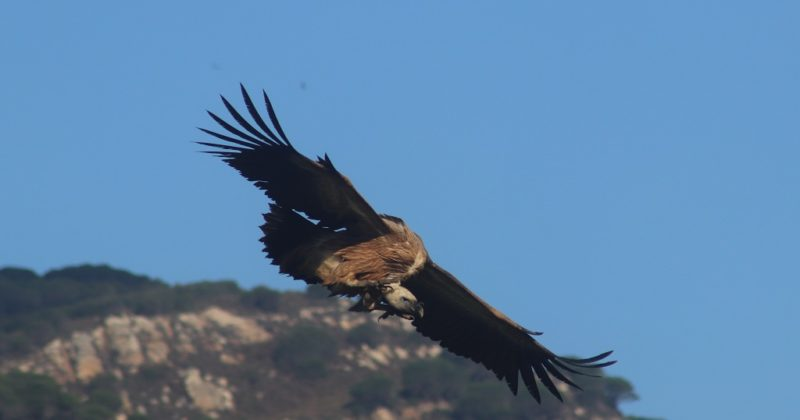 Why Bird Watching In Tarifa