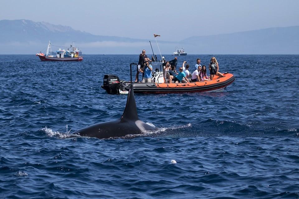 Wat Is De Beste Tour Om Walvissen Dofijnen En Orka's Te Spotten In Tarifa